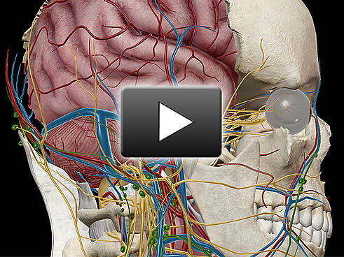 5 Step Guide Create Amazing 3d Images That Help You Explain Anatomy